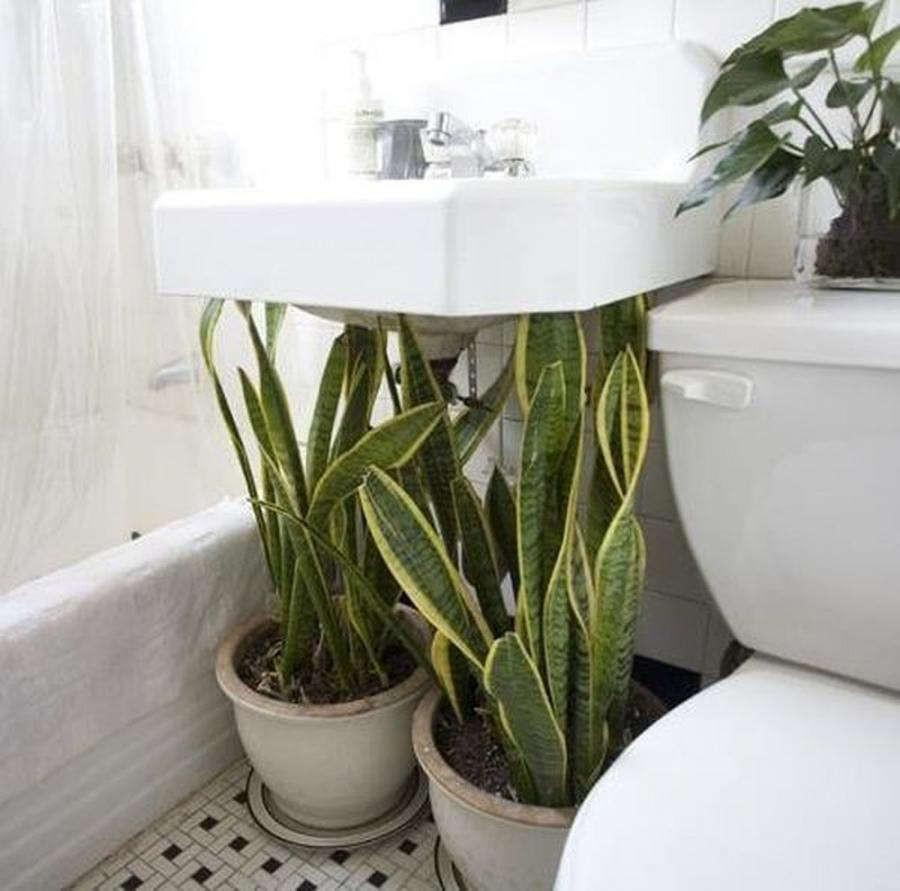 Đặt 5 loại cây này trong nhà tắm, Thần Tài ưng cái bụng, chẳng bao giờ sợ cạn tiền-1