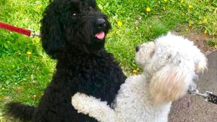 Hình ảnh 2 chú chó ôm nhau gây bão mạng - 1