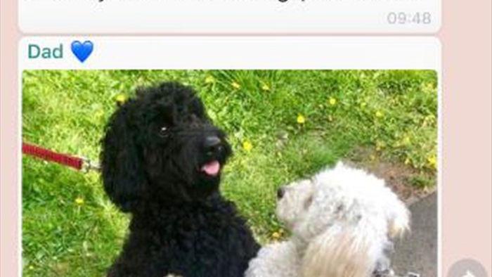 Hình ảnh 2 chú chó ôm nhau gây bão mạng - 2