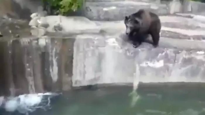 Say xỉn, trèo vào sở thú đánh nhau với... gấu - 2