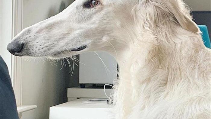 Chú chó đáng yêu có mõm siêu dài thu hút cư dân mạng - 1