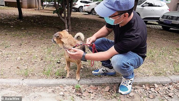 Cảm động chú chó đợi chủ đã qua đời tại bệnh viện ròng rã 3 tháng - 2