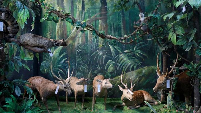 Bảo tàng động thực vật.jpg