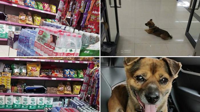 Cảm động chú chó đợi chủ đã qua đời tại bệnh viện ròng rã 3 tháng - 3