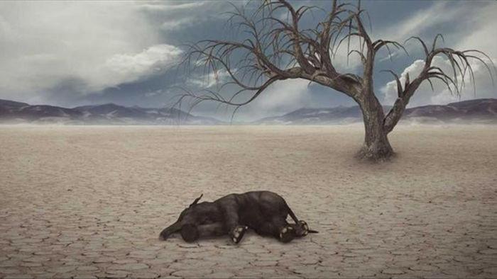 Sự kiện tuyệt chủng hàng loạt thứ 6 của Trái đất đang tăng tốc - 1
