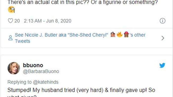 Con mèo ở đâu? Bức ảnh này đã gây bão trên mạng xã hội Twitter những ngày qua - Ảnh 3.