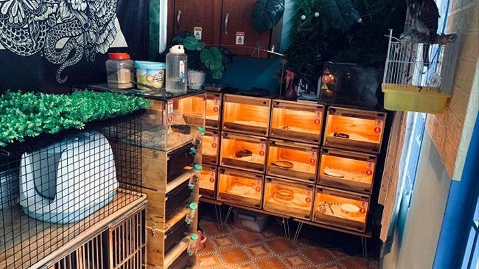 Chạm mặt ổ rắn chúa vằn vện trong nhà chàng trai Sài Gòn