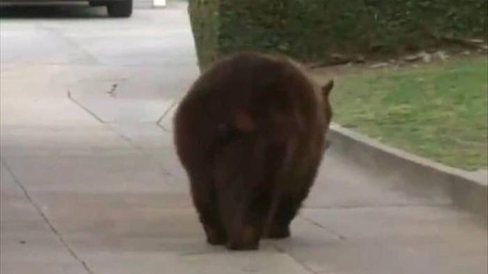 Bị gấu tấn công trong khi ngủ ở sân, người phụ nữ đánh trả bằng... laptop - 1