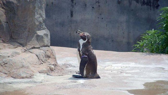 Chàng cánh cụt si tình, yêu khắc cốt ghi tâm nhân vật hoạt hình sau khi bị vợ bỏ - Ảnh 1.