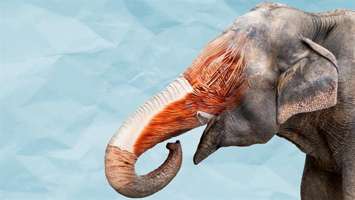 Điều gì xảy ra nếu một con voi đụng độ rắn hổ mang chúa, kẻ nào sẽ thắng? - Ảnh 4.