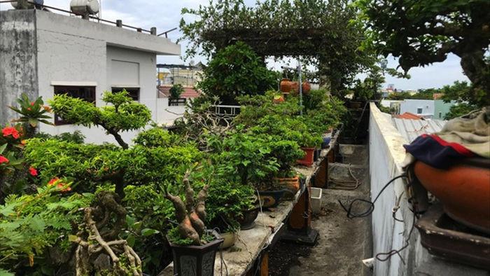 Vườn bonsai ngược trăm triệu đồng trên sân thượng nhà phố ở Quảng Nam - 14
