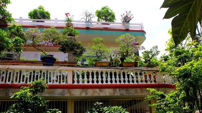 Vườn bonsai ngược trăm triệu đồng trên sân thượng nhà phố ở Quảng Nam - 2