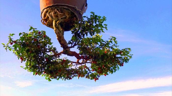 Vườn bonsai ngược trăm triệu đồng trên sân thượng nhà phố ở Quảng Nam - 7