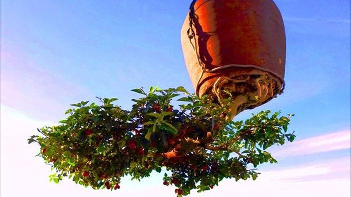 Vườn bonsai ngược trăm triệu đồng trên sân thượng nhà phố ở Quảng Nam - 5
