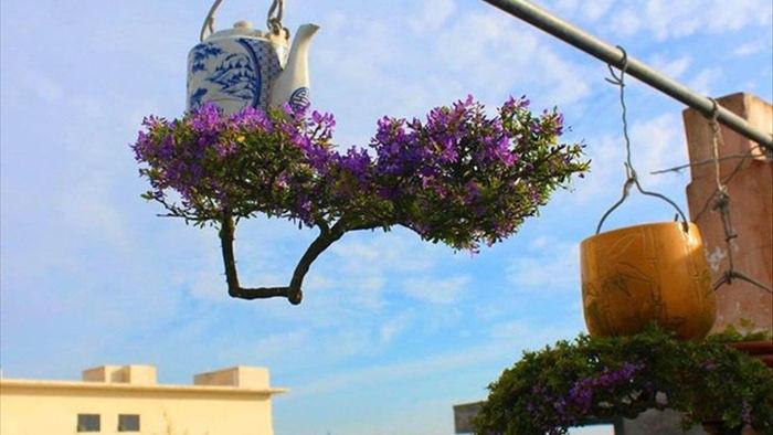 Vườn bonsai ngược trăm triệu đồng trên sân thượng nhà phố ở Quảng Nam - 6