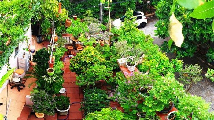 Vườn bonsai ngược trăm triệu đồng trên sân thượng nhà phố ở Quảng Nam - 11