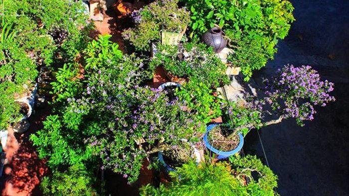 Vườn bonsai ngược trăm triệu đồng trên sân thượng nhà phố ở Quảng Nam - 10