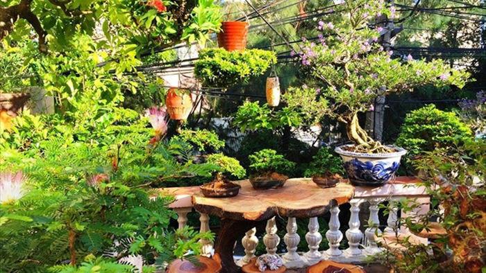 Vườn bonsai ngược trăm triệu đồng trên sân thượng nhà phố ở Quảng Nam - 3