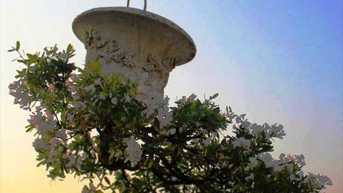 Vườn bonsai ngược trăm triệu đồng trên sân thượng nhà phố ở Quảng Nam - 4