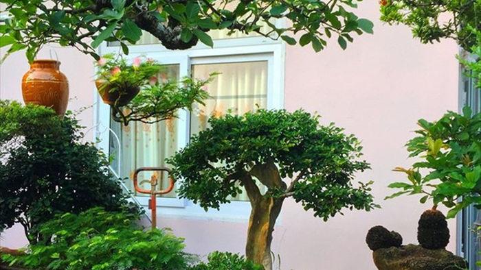 Vườn bonsai ngược trăm triệu đồng trên sân thượng nhà phố ở Quảng Nam - 9