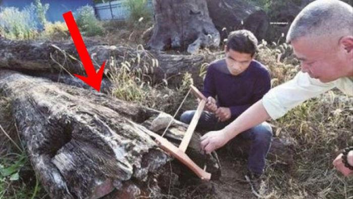 Mang khúc gỗ xấu xí về vứt ở góc vườn, 5 năm sau người đàn ông choáng váng phát hiện đó là cả gia tài trị giá 66 tỷ đồng - Ảnh 2.