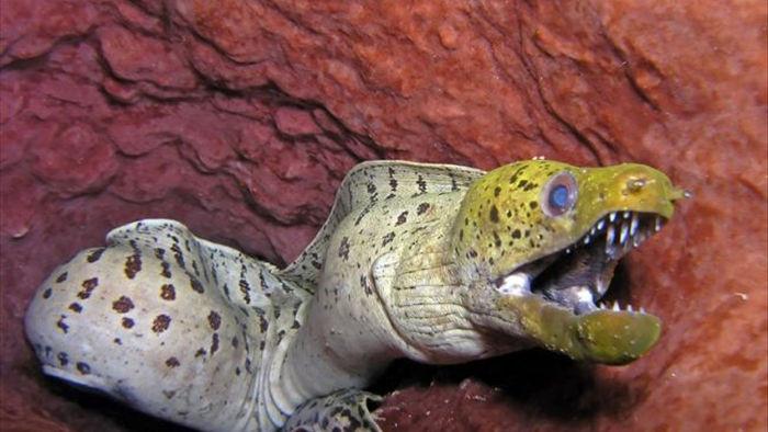 Cận cảnh hình thù kỳ dị của sinh vật dưới biển sâu (P2) - Ảnh 3.