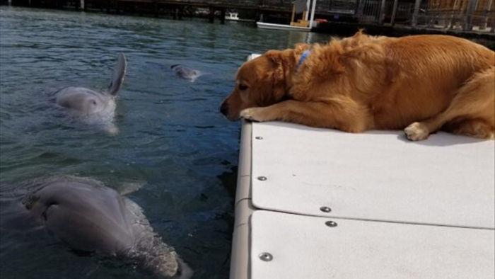 Chơi với nhau gần 10 năm chó và cá heo cứ gặp là trao nụ hôn, quấn quýt không rời - Ảnh 5.