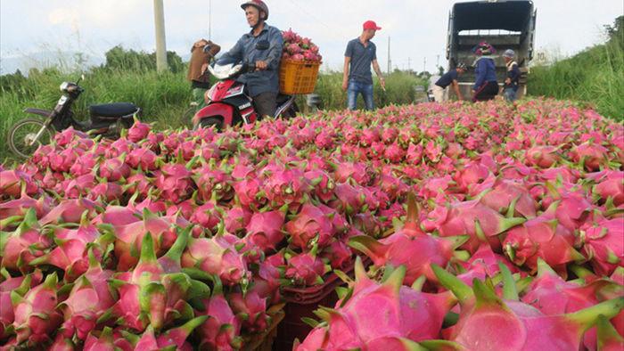 Hàng trăm thương lái Trung Quốc đổ bộ, 300 điểm gom hàng qua biên giới