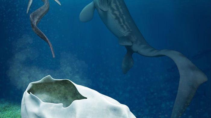 Phát hiện trứng hóa thạch lớn nhất trong thời đại khủng long, nó có thể đến từ một loài bò sát cổ đại chuyên ăn thịt cá mập - Ảnh 3.