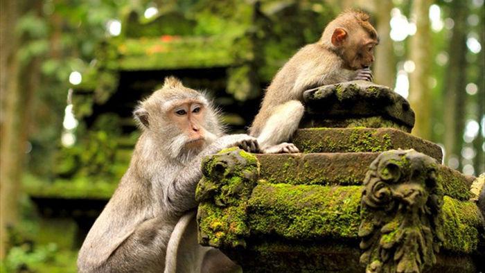 """Ngượng đỏ mặt khi bị khỉ kéo khóa quần, """"sàm sỡ"""" vòng 1 - 3"""