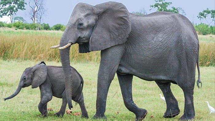 1001 thắc mắc: Loài vật nhỏ bé nào sát hại nhiều người nhất? - Ảnh 8.