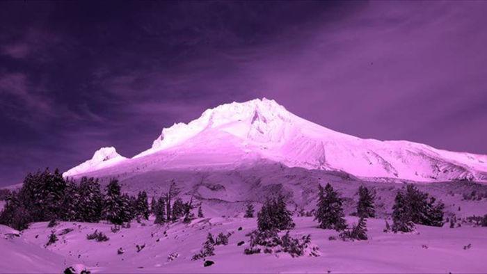 Tuyết hồng kỳ thú trên đỉnh núi Alps là dấu hiệu rất xấu của môi trường - 1