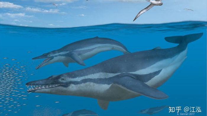 Cá voi răng vương miện: Làm sáng tỏ điểm khởi đầu của sự tiến hóa của cá voi tấm sừng - Ảnh 1.