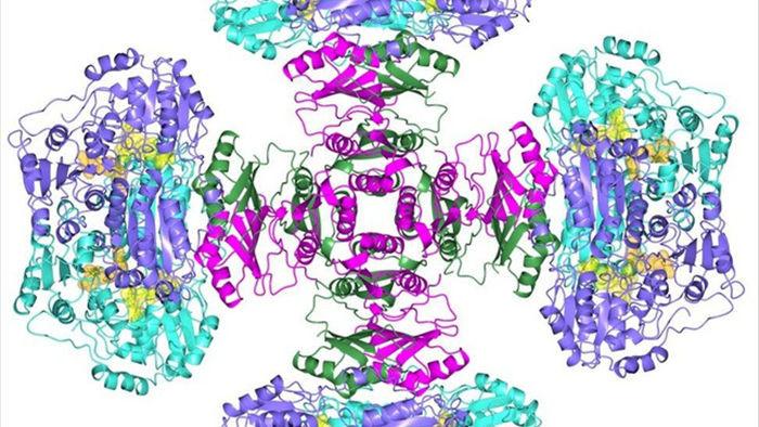 Bí ẩn enzyme nửa thế kỷ đã được giải quyết - 1