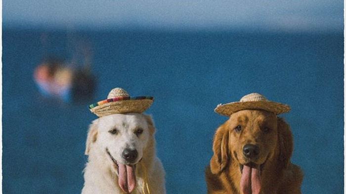 Phú Yên đẹp mê li qua lăng kính của nhiếp ảnh gia trẻ và 2 chú chó cưng - 4
