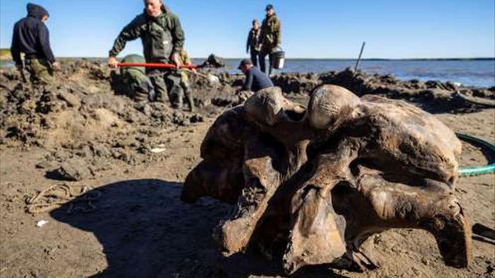 Băng tan tại Bắc Cực để lộ hài cốt voi ma mút 10.000 tuổi - 1