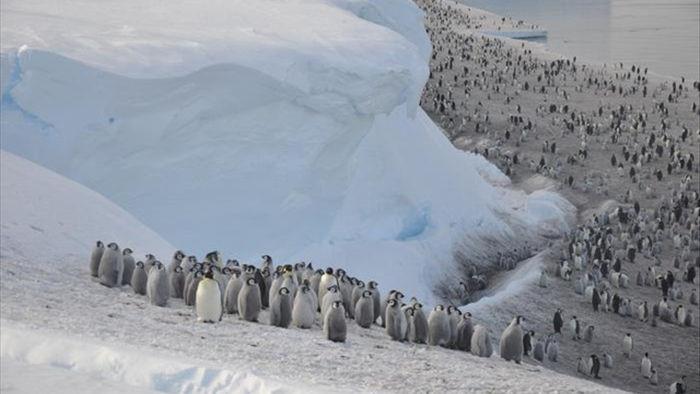 Phát hiện vùng đất chim cánh cụt lớn nhất Trái đất sống - 1