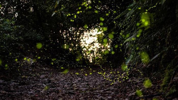 Ninh Bình: Lạc vào khu rừng đom đóm lung linh huyền ảo tựa chốn thần tiên - 2
