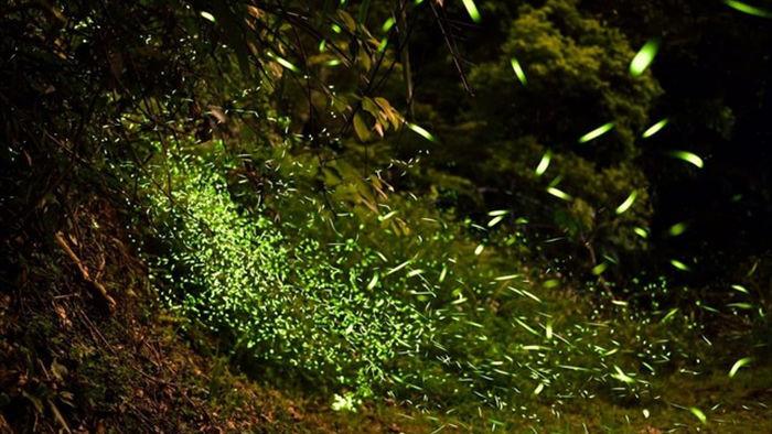 Ninh Bình: Lạc vào khu rừng đom đóm lung linh huyền ảo tựa chốn thần tiên - 11