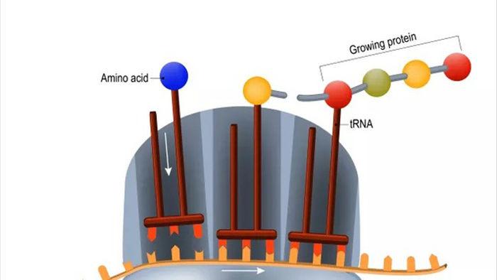 Đâu là những vắc xin ứng viên kháng SARS-CoV-2 tiềm năng hiện nay? - 2