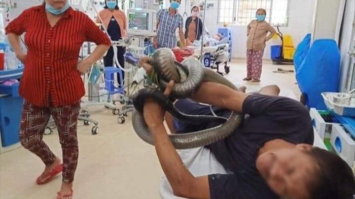 Rắn hổ mang chúa – loài rắn độc dài nhất thế giới - 2