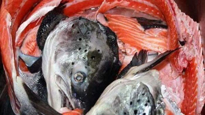 Chỉ 10 nghìn/kg, chế đủ món với hải sản 'nhà giàu'