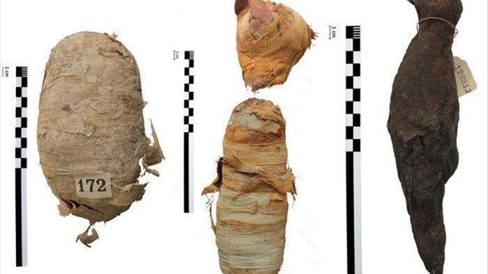 Bí ẩn các xác ướp động vật Ai Cập cổ đại - 1