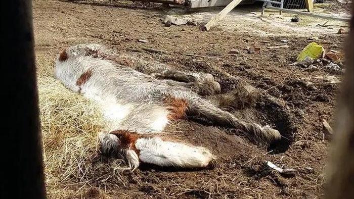 Cuộc lột xác thần kỳ của chú ngựa Pony: Từ xác khô trộn bùn đến tấm thân đẹp rực rỡ - Ảnh 1.