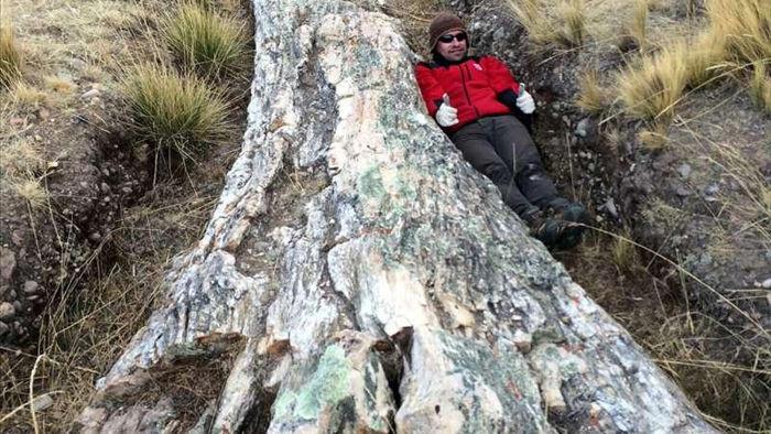 Phát hiện hóa thạch cây khổng lồ 10 triệu năm tuổi ở Peru - 1