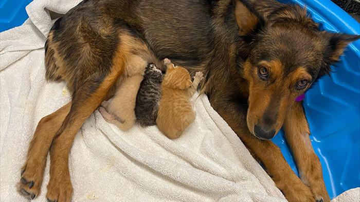 Chó mẹ cắn toạc tấm nệm tìm con đã chết, sự xuất hiện của 4 chú mèo đã viết nên cổ tích - Ảnh 2.
