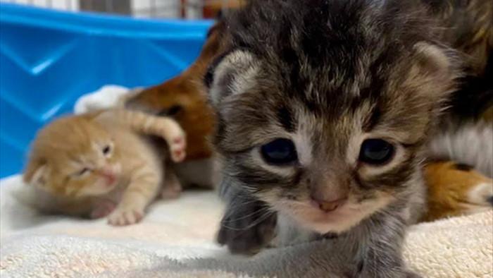 Chó mẹ cắn toạc tấm nệm tìm con đã chết, sự xuất hiện của 4 chú mèo đã viết nên cổ tích - Ảnh 3.