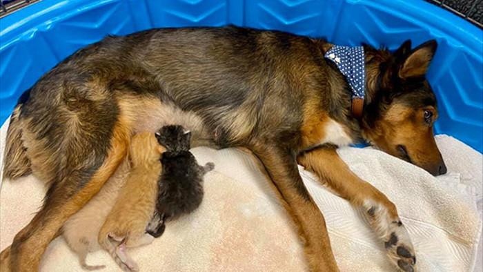 Chó mẹ cắn toạc tấm nệm tìm con đã chết, sự xuất hiện của 4 chú mèo đã viết nên cổ tích - Ảnh 8.