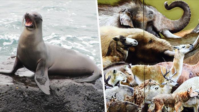 """Sự tuyệt chủng của động vật có vú đang tăng tốc đến """"làn sóng thứ hai"""" - 1"""