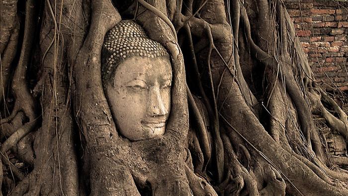 Bí ẩn đầu tượng Phật 700 năm tuổi ẩn mình trong rễ cây cổ thụ - 1